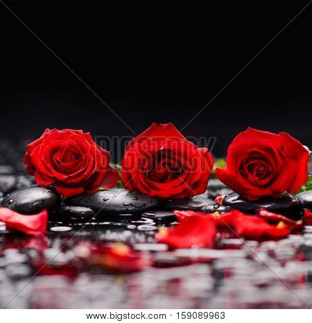Three Red rose with petals and therapy stones