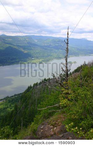 Angel'S Rest, Columbia Gorge, Oregon