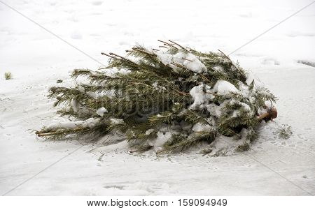 close-up christmas tree thrown out to the snow
