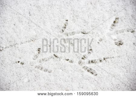 the traces of the bird at the snow