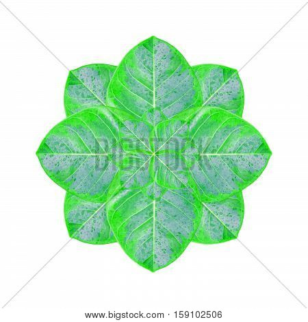 Digital photo manipulation technique ornate plant flower isolated in white background.
