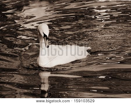 Игра с эффектами съемки: черно-белый портрет грациозной птицы.