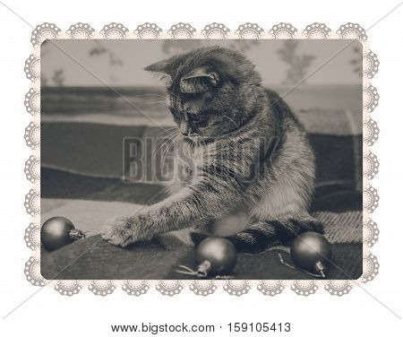 Cute Scottish cat is playing with christmas balls. Checkered plaid. Black and white,toned. Lace frame.I solated on white