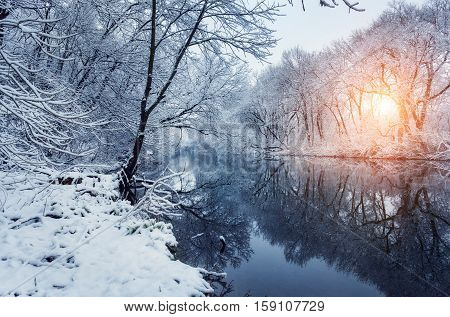 Beautiful Winter In Forest On The River At Sunset