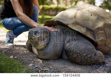 Young Woman Touching Giant Turtle in Arequipa Peru.
