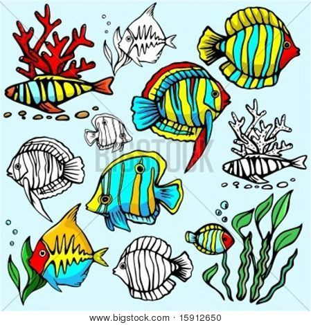 A set of 6 vector illustrations of  exotic fishes in color, and black and white renderings.