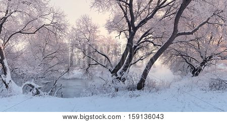 Colorful winter landscape. Panorama of winer sunrise. Bright Christmas background.