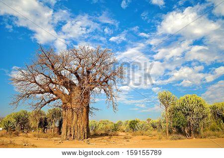 landscape of the lake Eyasi, north of Tanzania