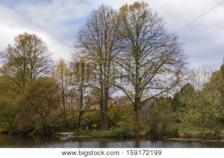 Tall autumn trees by the lake with a small boat
