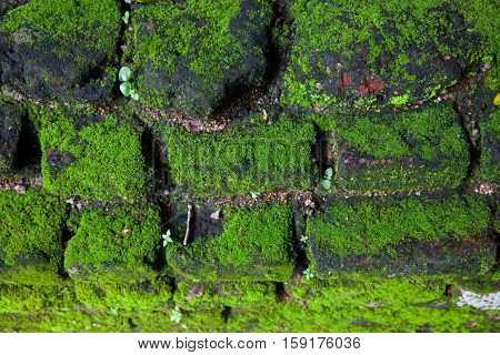 Green moss in nature - beautiful stone stairs with green moss and green leaf in natural Sri Lanka