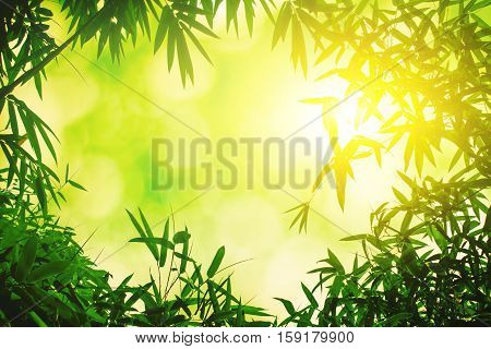 Green bamboo leaves or with background .Green Energy.isolated spring summer