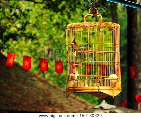 Bird in a cage hanging outside in nature in vietnam