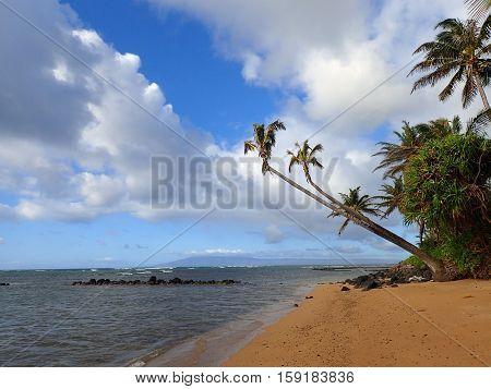 Coconut Tree hangs over Fish Pond and beach with Gentle Waves break off shore and on Lanai visible in the distance in the state of Hawaii.