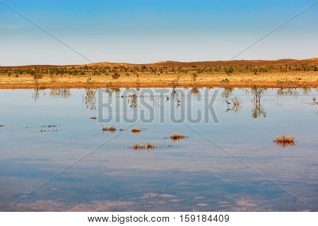 Birds In The Lake Of Oasis In Sahara Desert