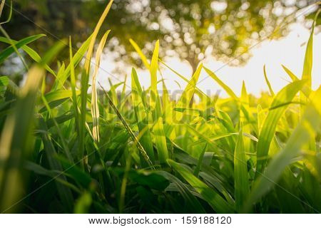 green grass forest trees where light shines