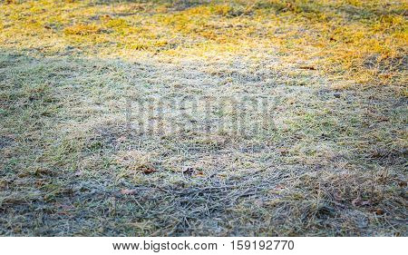 Frosted Grass At Cold Winter Day