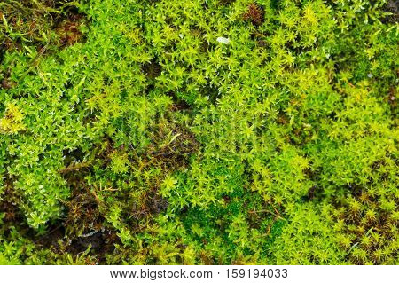 Close Up Of Green Moss