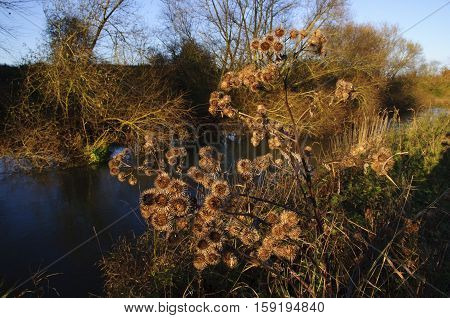 Autumn andscape of the Great River Ouse near Radwell in Bedfordshire England UK.