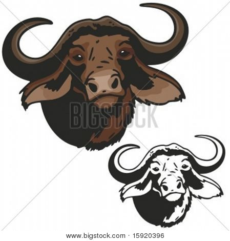 Vector illustration of a musk ox.