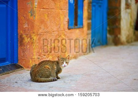Adorable Tabby Cat On A Street In Essaouira, Morocco
