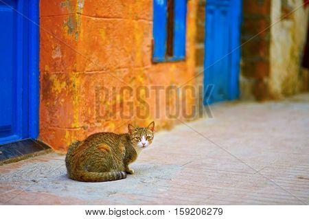 Stray Tabby Cat On A Street Of Essaouira