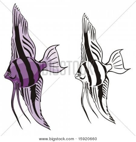 Vector illustration of a fish.