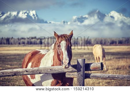 Vintage Toned Photo Of A Chestnut Horse With Grand Teton Mountains In Background, Wyoming, Usa