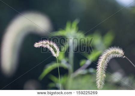 Glowing Grass #3