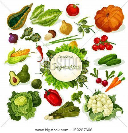 Vegetables vector poster. Vegan fresh farm food veggies cabbage, kohlrabi and pumpkin, cauliflower, corn and radish, avocado, mushroom and leek, olive, broccoli and pea, chili pepper, cucumber and potato, beet, carrot and tomato, squash, onion