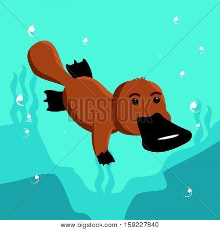 platypus swimming cartoon eps10 vector illustration design