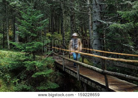 Traveler Standing On A Bridge And Looking On Forest