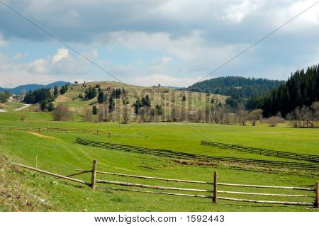 Landscape Of Young Green With Bright Blue Sky