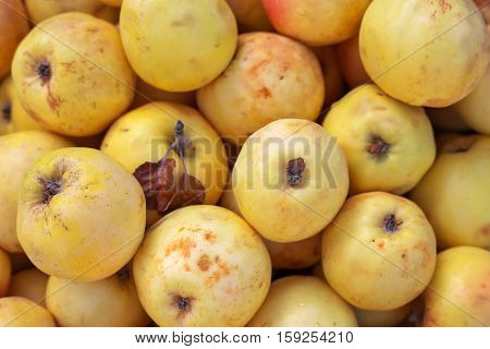 Background of ripe slightly spoiled colorful apples. Apples on the market