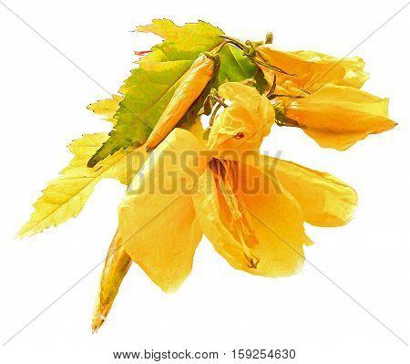 Yellow Hollyhock Fresh Frozen Flower, Photo Manipulation