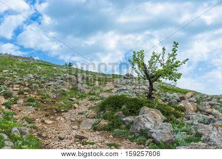 Rocks wild flowers and lonely pear-trees - spring in Crimean mountains at a height above 1000 metres.