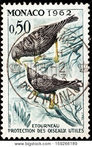 LUGA RUSSIA - NOVEMBER 29 2016: A stamp printed by MONACO shows common starling (Sturnus vulgaris) or European starling - medium-sized passerine bird in starling family Sturnidae circa 1962