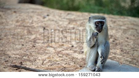 In South Africa      Wildlife  Nature    And   Monkey