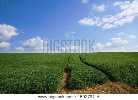 The sky is the limit! Green meadow with a road to the horizon