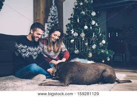 Young smiling couple in sweaters petting dog on carpet in room with decorated Christmas fir tree.