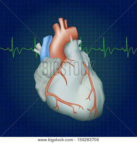 Human heart. Anatomy illustration. Colorful image, dark blue science background. Heartbeat
