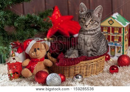Christmas gifts, decoration and kitten under the tree