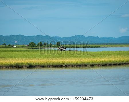 The Kaladan River and rice fields at the Rakhine State in Myanmar.