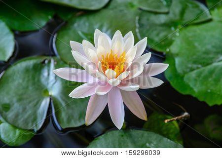 Fold Lotus.