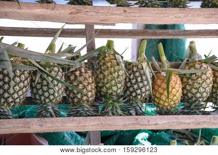 Fresh Pineapple For Sale .