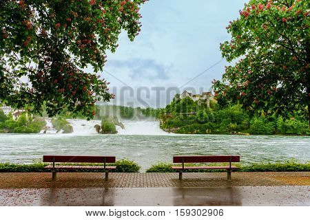Bench Under The Tree At Rhine Falls From Switzerland
