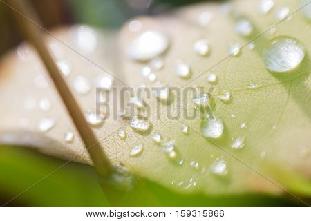 Water Drops On Leaf #1