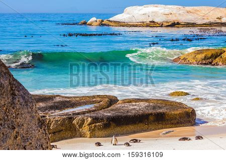 Huge boulders and black-white penguins on the beach of Atlantic Ocean. Boulders Penguin Colony.  The concept of ecotourism
