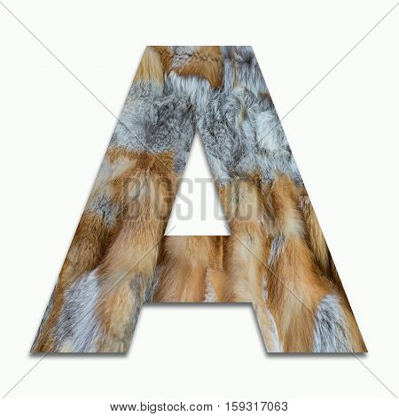 A red fox fur in a font trained