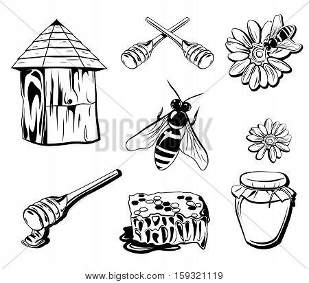 Honey Isolated Elements Cocept. Bee, Jar, Flower Vector illustration