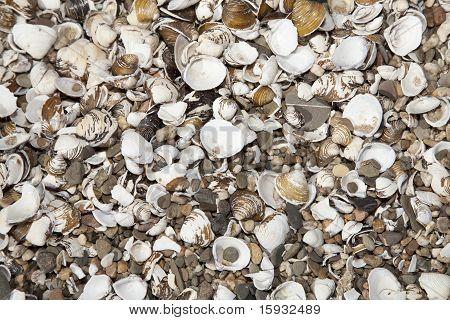 Wallpaper Of Shells